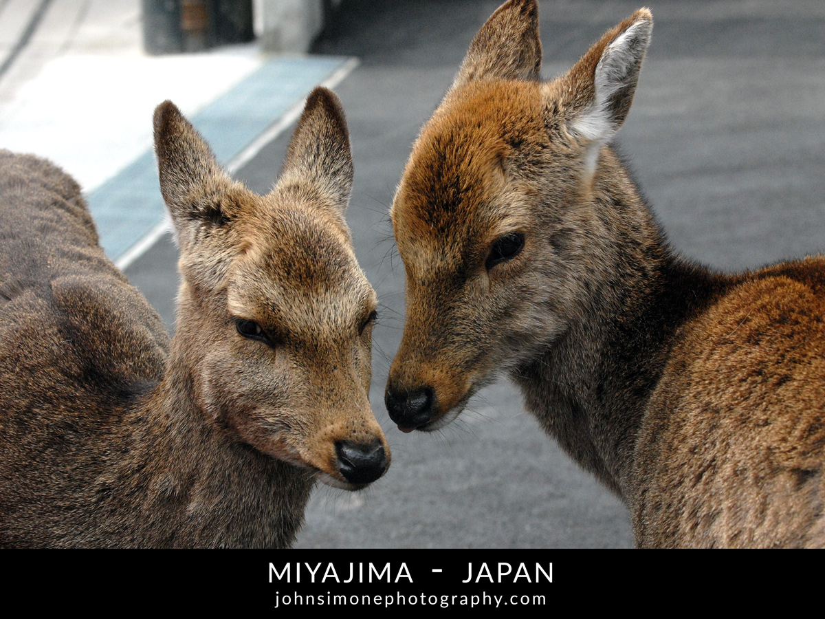 A photo-essay by John Simone Photography on Miyajima, Japan