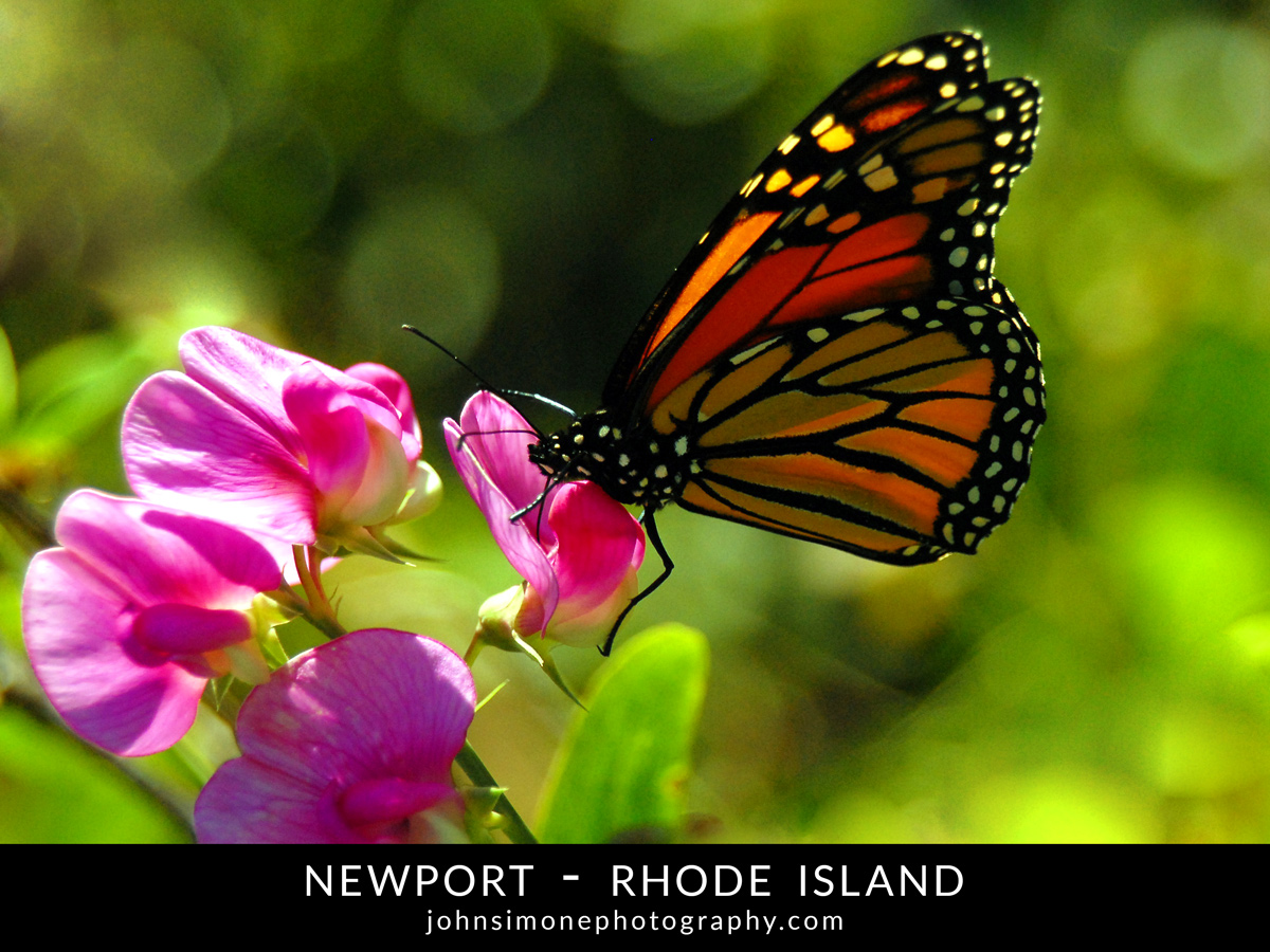 A photo-essay by John Simone Photography on Newport, Rhode Island